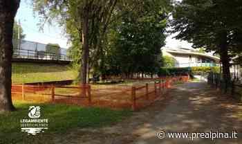Scompaiono alberi a Sesto Calende, Legambiente protesta - La Prealpina