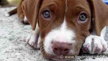 Fiuggi, tre cani morti avvelenati. La segnalazione e le raccomandazioni del sindaco - FrosinoneToday