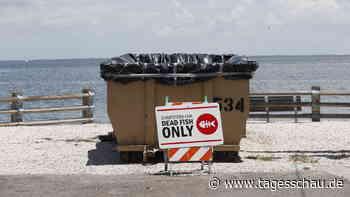 Alge verursacht Massensterben von Meerestieren in Florida