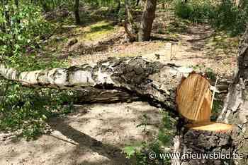 Onveilige parkbomen worden gekapt