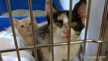 Florence animal shelter over run with animals, pleading for help - wpde.com