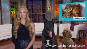 8PM: World's Funniest Animals - WCCB Charlotte