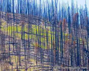 Wildfires and wildlife: How animals survive fires and how you can help - Summit Daily News