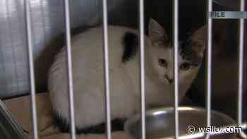 New Illinois law to protect pets and animals - WSIL TV