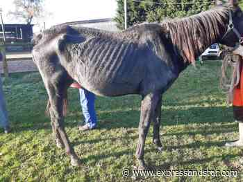Woman banned from keeping animals after starving and sick horses found at farm - expressandstar.com