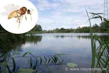Als het geen muggen zijn, zijn het wel knijten: hier pas je maar beter op als je een wandeling wil maken met blote benen