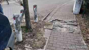 Straßenbau: Bäume machen Sorgen - Stadt Erkner hat Gutachten in Auftrag gegeben - moz.de
