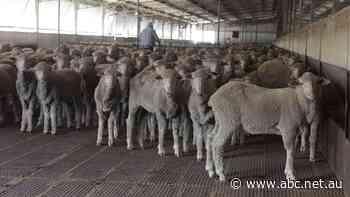 Live exports suspended over welfare concerns in Jordan