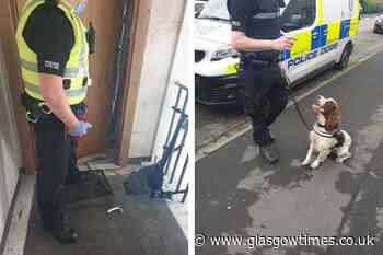 Police Scotland dog Archie helps cops with Glasgow drugs raid - Glasgow Times