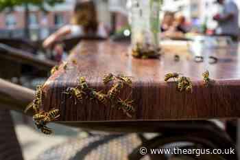 Warning issued over 'drunken wasps' in Brighton