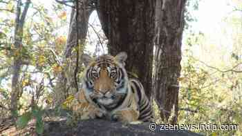 International Tiger Day: India committed to ensuring safe habitats for its tigers, says PM Modi