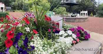 Special sensory garden opening in Hanover Park - Daily Herald