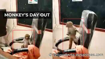 Watch: Monkey plays around school principal's chair in Gwalior