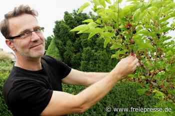 Ein Maulbeerbaum erfreut süße Mäuler - Freie Presse