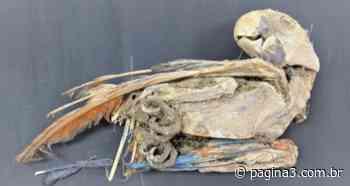 Os papagaios mumificados do Atacama - Jornal Página 3