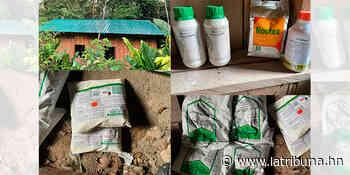 Aseguran plantación de coca y destruyen narcolaboratorio en Iriona, Colón - La Tribuna.hn