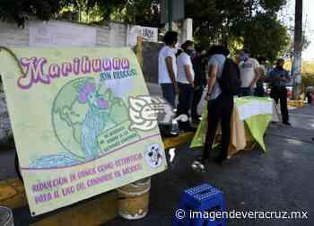 En Xalapa, piden reglas claras para el uso legal de la mariguana - Imagen de Veracruz