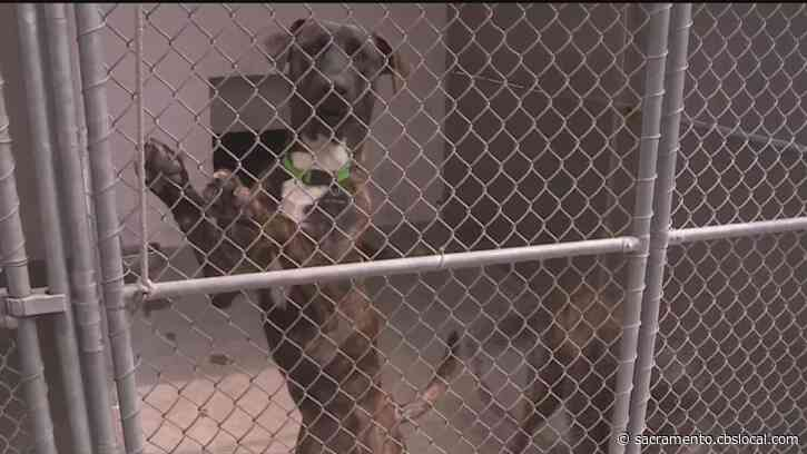Animal Shelters At Capacity As People Return To Work And Can't Care For Pets