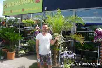 Bromfietser gaat ervandoor met twee meter hoge palmboom