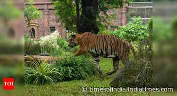 International Tiger Day: 14 tiger reserves of India get elite tag of conservation