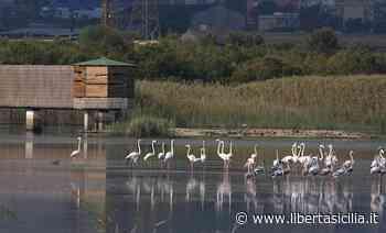 Priolo Gargallo. Operazione Nettuno, ripristino di isole e nidi galleggianti alla Riserva Naturalistica Saline - Libertà Sicilia