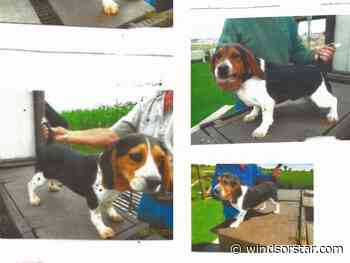 Essex County OPP continue search for stolen dogs