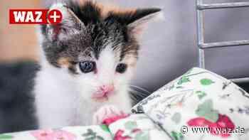 Viele Streunerkatzen und Kitten im Tierheim Bochum-Hattingen - Westdeutsche Allgemeine Zeitung