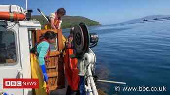 High hopes for Scottish farmed seaweed