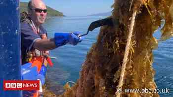 The seaweed farmers with high hopes for their harvest