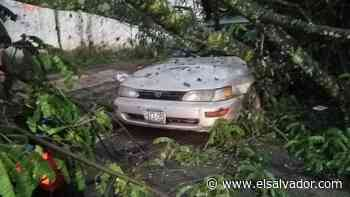 Árbol cae en dos vehículos estacionados en colonia de Santa Ana | Noticias de El Salvador - elsalvador.com