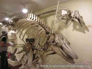 It's pter-iffic! One of Brighton's quirkiest museums reopens - Brighton and Hove News