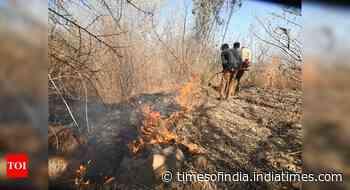Over 3 lakh forest-fires alerts recorded since November 2020: Govt
