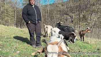 Bernbacher Klimahelden - Mäher auf vier Beinen fressen sich durch - Schwarzwälder Bote