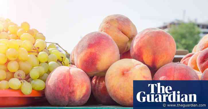 What makes a wine fruity? | Fiona Beckett on drink