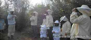 Bourg-en-Bresse - Le rucher de la Providence fait son miel - La Voix de l'Ain