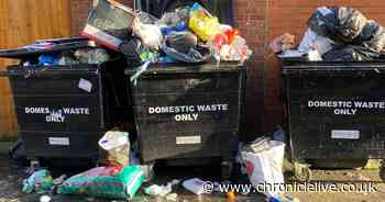 Arthur's Hill alley 'infested with rats' due to overflowing communal bins
