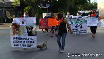 Mérida: Vecinos señalan a enfermera del IMSS como la 'matagatos' - PorEsto