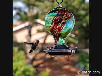 Hummingbird In Flight: Photos Of The Week - Patch.com