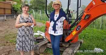 Vadena, raccolte le firme per salvare lo storico albero - Alto Adige
