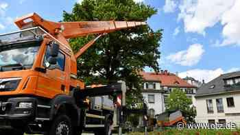 Baumpflege in luftiger Höhe in Greiz - Ostthüringer Zeitung