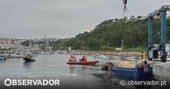 Carcaça da baleia de 18,8 metros já foi removida do porto da Nazaré. Causas da morte ainda estão por apurar - Observador