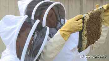 Airdrie, Alta., extends urban beekeeping pilot hoping for more interest