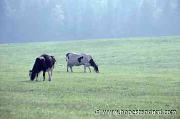 BC issuing new farmgate licences to allow meat sales this fall – Hope Standard - Hope Standard