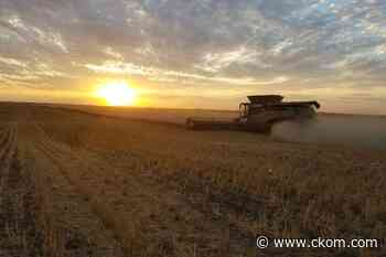 Still hope for an average crop in some parts of Sask. - CKOM News Talk Sports