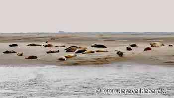 Les règles à respecter pour observer les phoques à Berck (et ailleurs) - Le Réveil de Berck