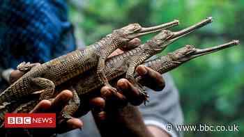 India reptile park struggles to survive amid Covid