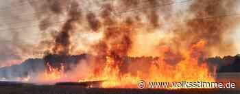 Feld am Seedorfer Weg in Genthin brennt unter einer Hochspannungsleitung - Volksstimme