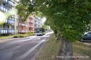 40 Ahornbäumen droht an der Gröblerstraße Genthin die Fällung - Volksstimme