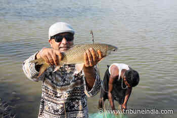 Una siblings give up jobs to take up fish rearing - The Tribune India