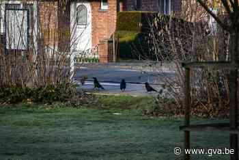 Kauwen aan De Reukens vogelvrij verklaard (Aartselaar) - Gazet van Antwerpen Mobile - Gazet van Antwerpen